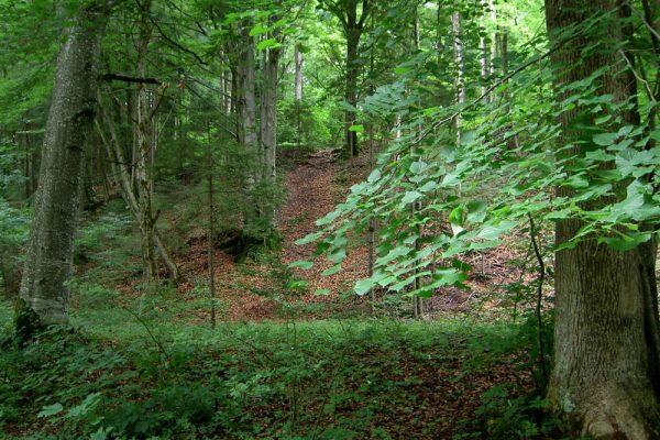 immer wieder Wald am Münchner Jakobsweg